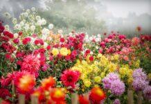 laka z kwiatami