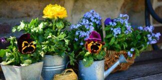 kwiaty w malym ogrodku
