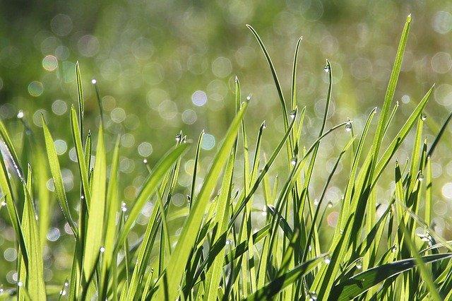 trawa w ogrodzie