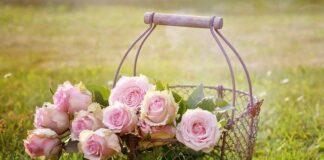 rozowe roze w koszyku